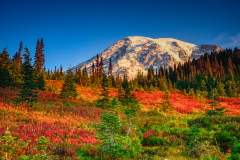 Mount Rainier and Fall Colors from Paradise