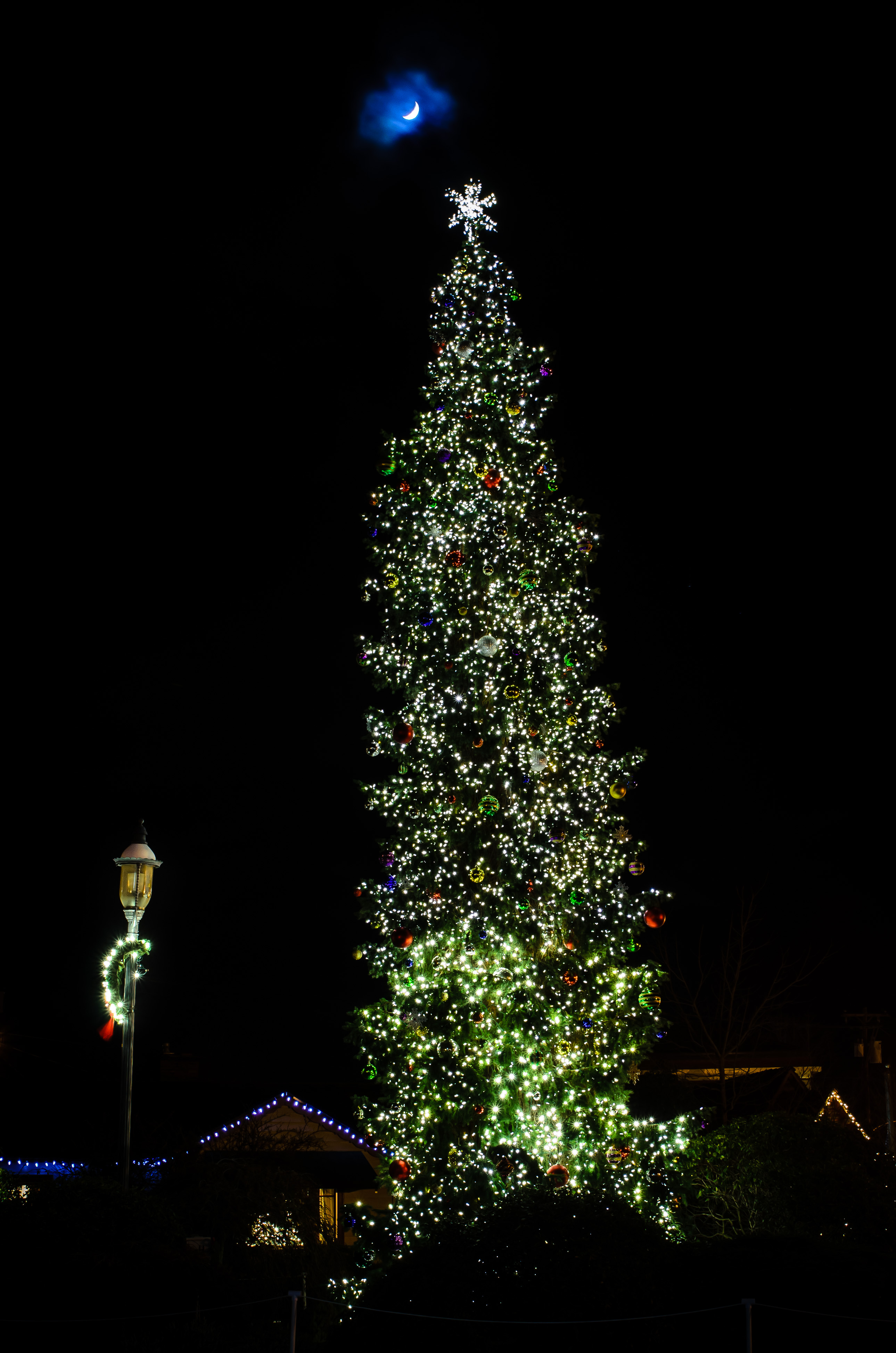 Edmonds, WA Town Christmas Tree