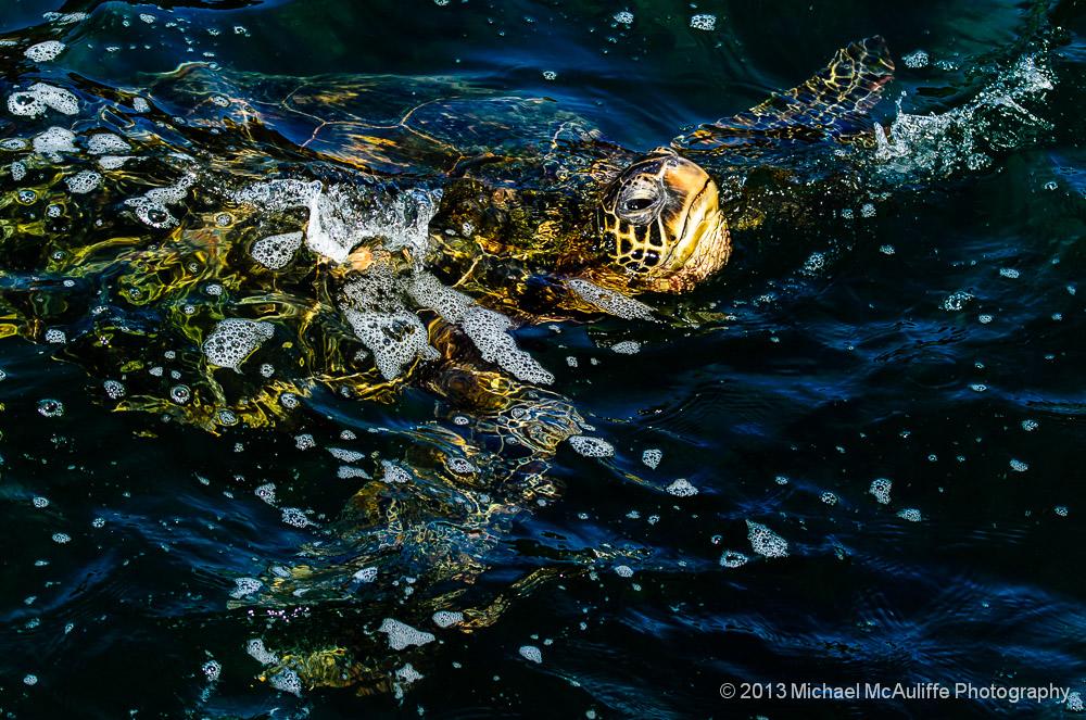 Sea Turtles of Kauai with Kauai Photo Tours