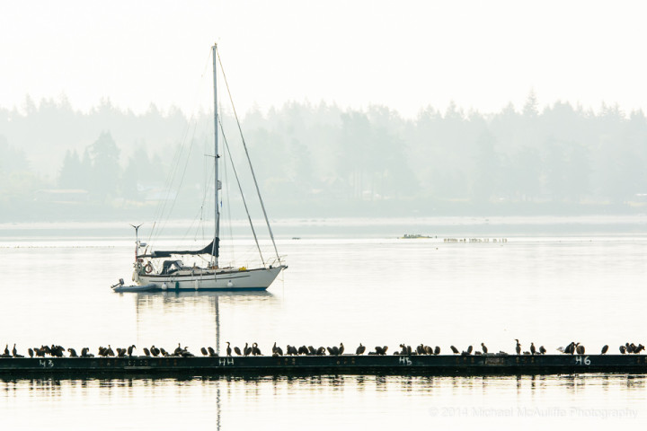 Birds and a sailboat on a foggy morning from the Semiahmoo spit.