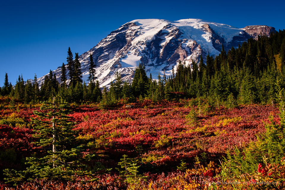 Fall colors at Paradise on Mount Rainier.