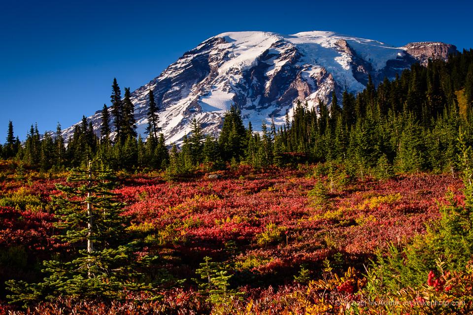 Mount Rainier: Paradise Autumn Colors