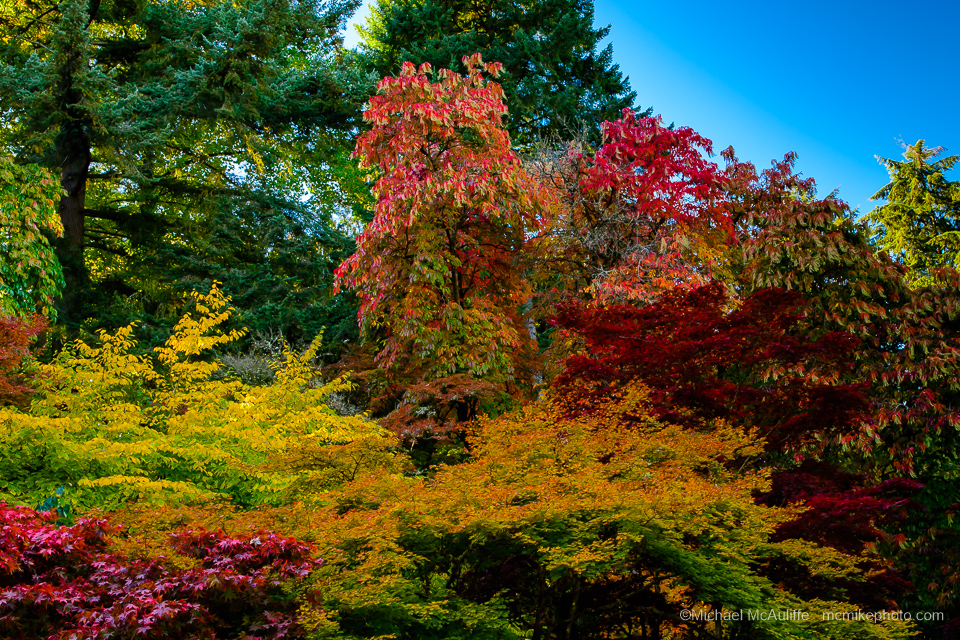 A photo of the fall colors at Seattle's Washington Park Arboretum