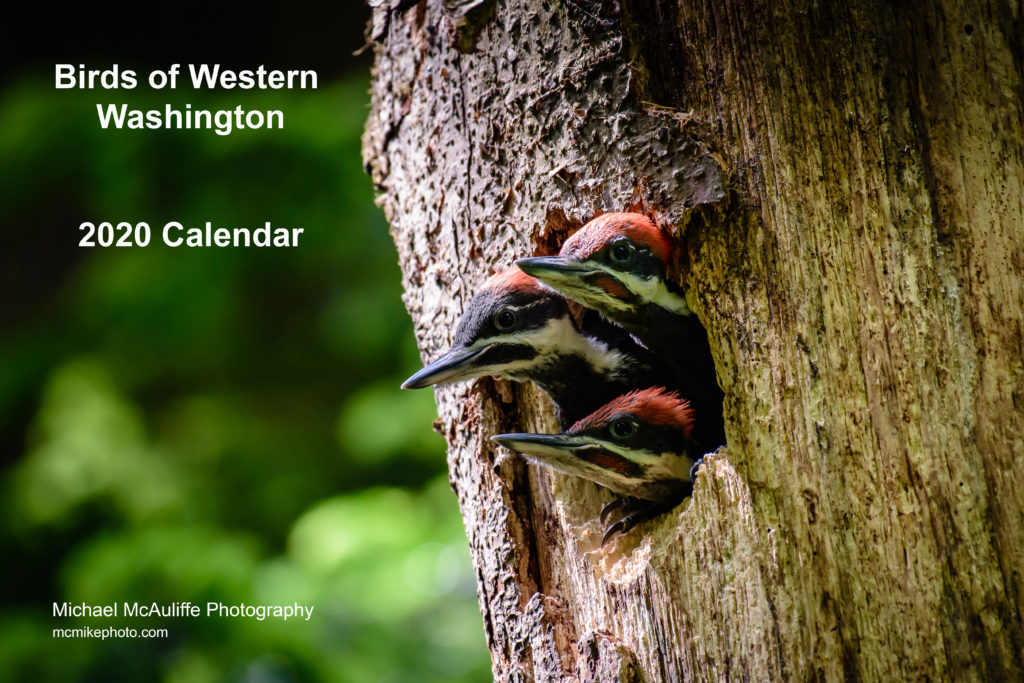 Birds of Western Washington 2020 Calendar