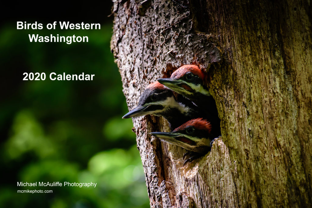 2020 Birds of Western Washington Calendar. Michael McAuliffe Photography
