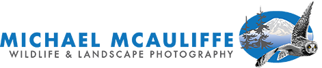 Michael McAuliffe Photography