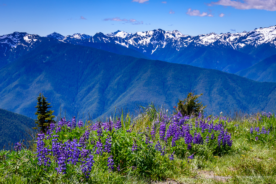 Olympic Mountains from Hurricane Ridge in Olympic National Park.