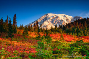 Fall Colors at Mount Rainier